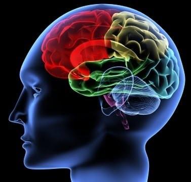 Functional 3D brain
